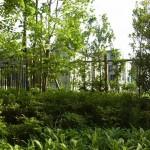 窓の奥に広がる雑木風庭園