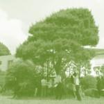 既存敷地には立派な松がありその懐に抱かれるように家族の暮らしがあった。人々の記憶の中に、あの松を残したい…。
