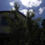 2階の軒先に届きそうな木々と夏の青空